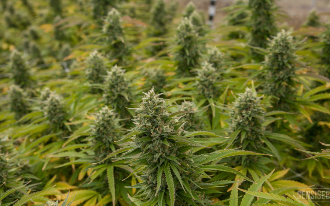 It makes economic sense to legalise drugs